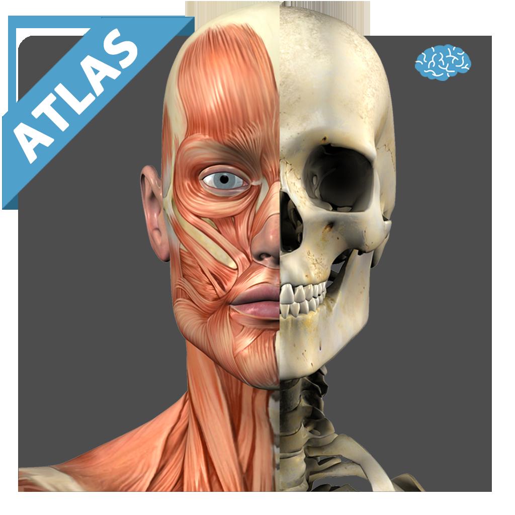 Anatomy Atlas Free | FREE Android app market